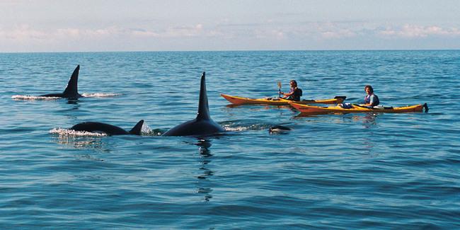 Orques Baie des iles Nouvelle Zélande