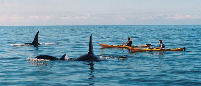 Kayak Orques en Nouvelle Zélande