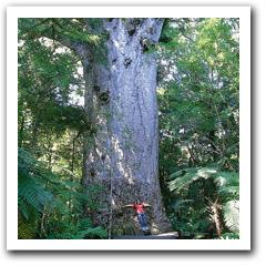 Waipouaforest
